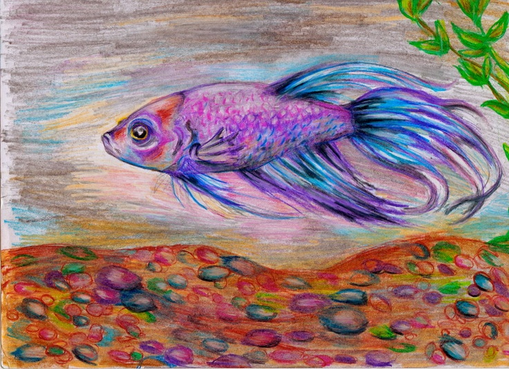 Betta fish drawing | Fish Art | Pinterest | Zeichnungen ...  Betta Fish Drawings