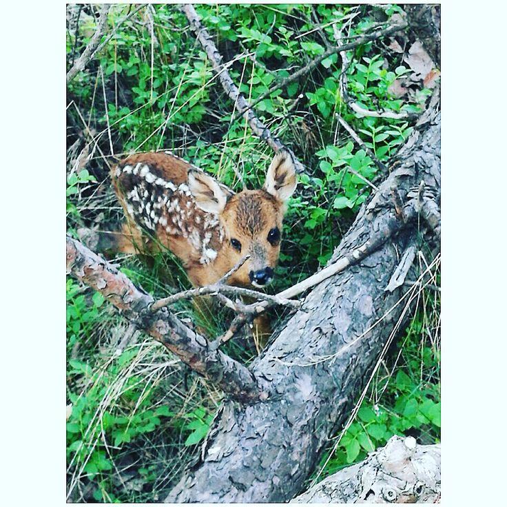 A deerkid 🌿💕