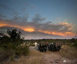 Sundonwers on the Sabi Sands game reserve
