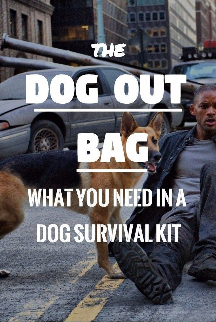 If you have a four-legged friend, you should be setting up a dog survival kit with the right essentials for when you both get your survival mode on