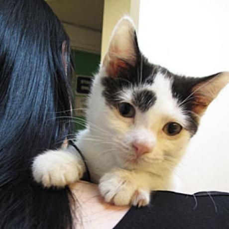 New Treatment Offers Hope For Cats with FeLV and FIV   Catster