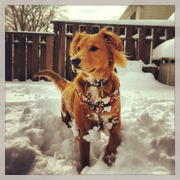 40 Super Excited Snow Dogs Of Instagram