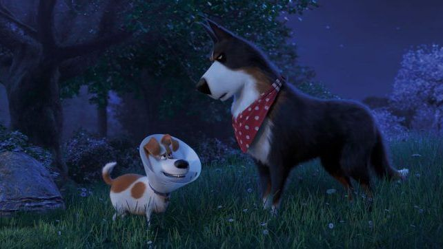 Max Meets Rooster In New The Secret Life Of Pets 2 Clip Secret Life Of Pets Pets Pet Max