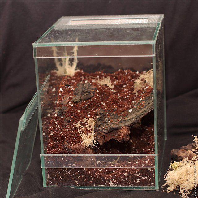 пауки в террариуме картинки свойства