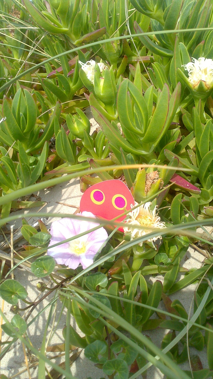 Lumlum se tollaescondió en las flores
