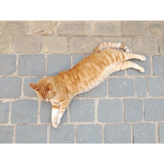 """Take 1 scene 1  - León  #cat #ginger #gato #leon #verano #relax"" Photo taken by @bnnphotos on Instagram, pinned via the InstaPin iOS App! http://www.instapinapp.com (01/25/2015)"