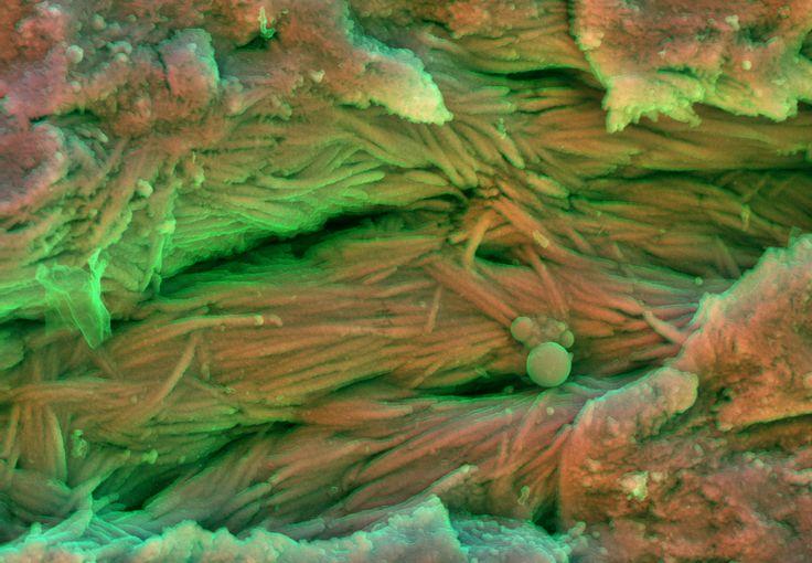 DDC-SEM of fossil - pink - 1.jpg