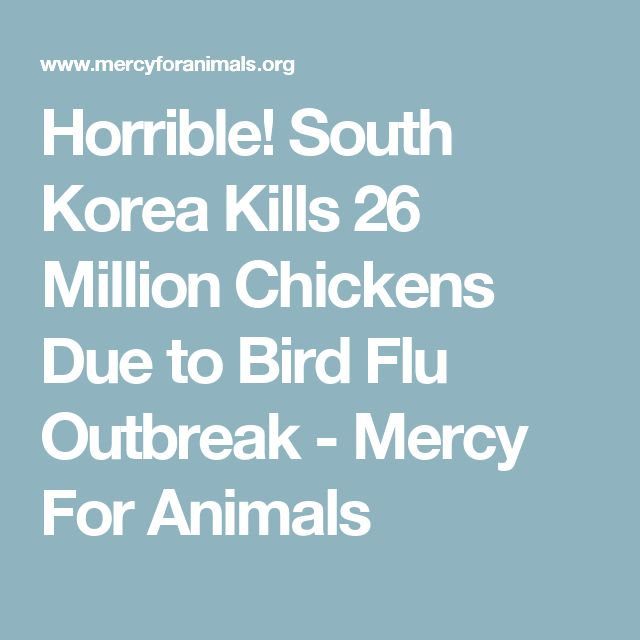 Horrible! South Korea Kills 26 Million Chickens Due to Bird Flu Outbreak - Mercy For Animals