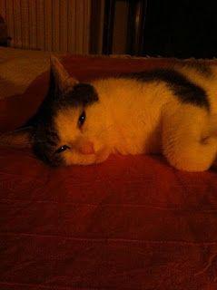 """""""Vieni, gatto bello, sul mio cuore innamorato; tieni strette l'unghie nelle zampe, e lasciami annegare nei tuoi occhi belli fatti d'agata e metallo."""" (Charles Baudelaire)"""