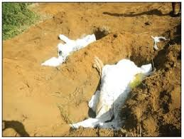 this picture reveals the bodies of the victims that was killed by Daisy De Melker. the police were permitted to look for concrete evidence to prove whether the wrongdoer was guilty or not sincerely so.