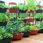 Совмещенное выращивание цветов и овощей в контейнерах