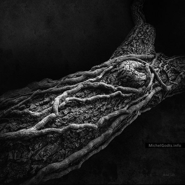 The photograph of a dead vine that twists around a tree trunk is digitally manipulated to express a feel of entrapment. Black and white wall art photography for art collectors or for a home decor.