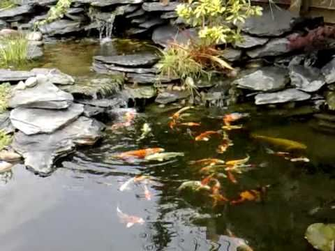 Best 25 pond fountains ideas on pinterest outdoor fish for How to build a koi pond step by step