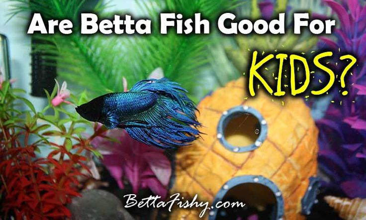 17 best images about betta fish pics on pinterest for What kind of fish can live with a betta