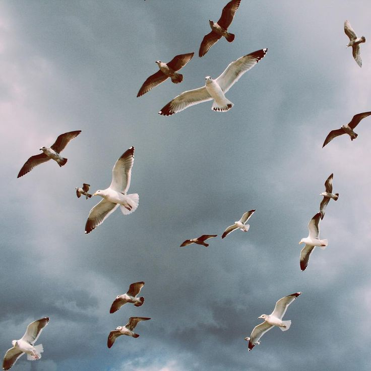 Hitchcock moment.  #brighton #Britain #seagulls #nature #birds #hitchcock #sky #vscocam #vsco #travel