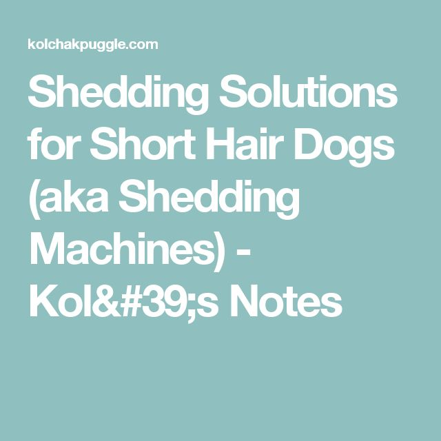Shedding Solutions for Short Hair Dogs (aka Shedding Machines) - Kol's Notes
