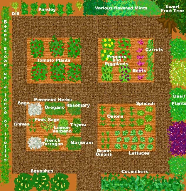 Sample kitchen garden plan in a 4' x 6' space.
