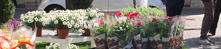 Le tue piante sono stanche? Rovinate? Hai problemi di rifioritura o alle foglie? Non aspettare che sia troppo tardi, prova con il concime organo-minerale.