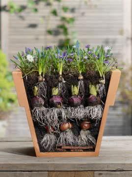 Sadzenie cebulek kwiatowych do doniczek