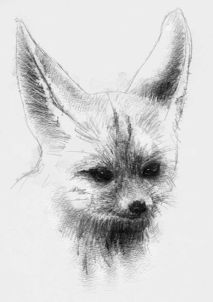 1000 ideas about fox drawing on pinterest fox - Pagina da colorare fennec fox ...