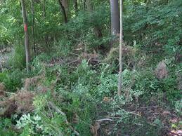 Image result for forest bush