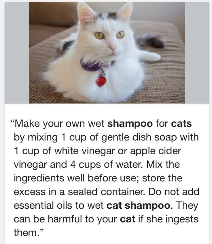 DIY Cat Shampoo. This works really well, and even helps with my cat's dandruff. Gentle and it works.