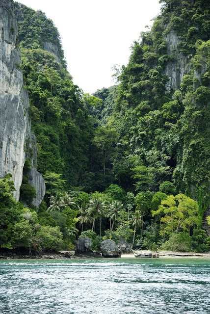 Jungle | Stunning Places #StunningPlaces