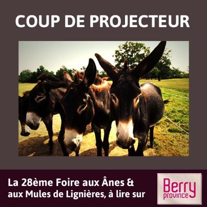 Coup de projecteur sur la 28ème et malheureusement dernière foire aux ânes et aux mules de Lignières. RDV le weekend de la Pentecôte !