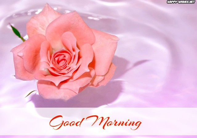 Good Morning Roses Images Rose Water For Skin Uses For Rose Water Rose Water