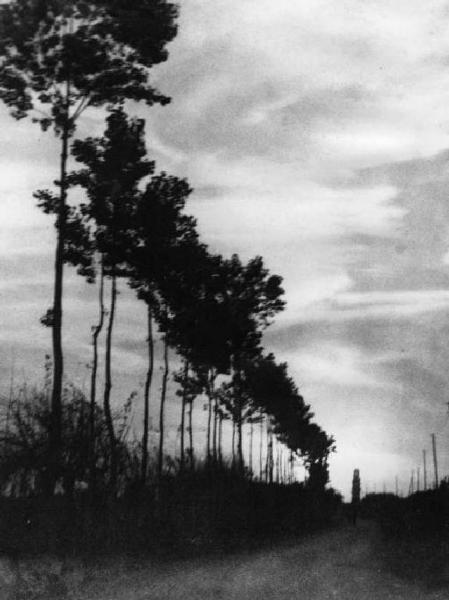 Cremona. Paesaggio. Viale alberato. (Torquato Zambelli 1921)