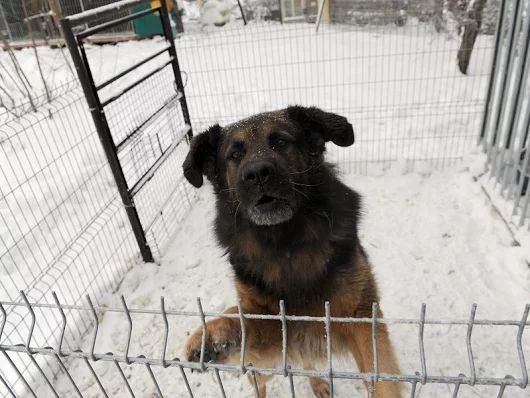Schroniska - Seryjni mordercy psów?