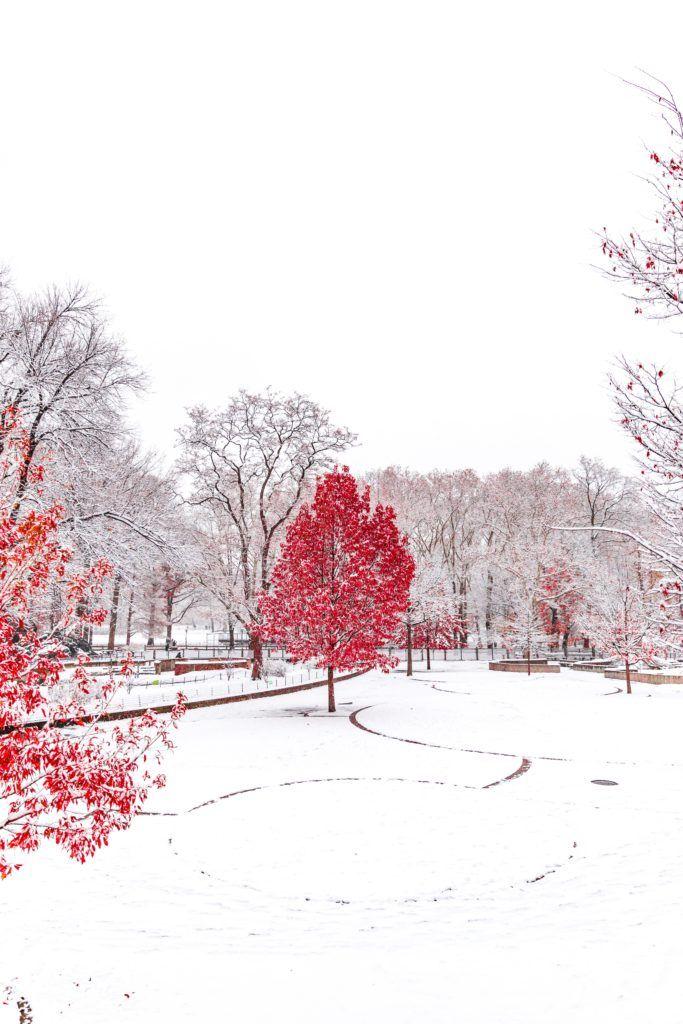 Easy Tasks For Your February Garden Winter Wallpaper Hd Iphone Wallpaper Winter Winter Wallpaper