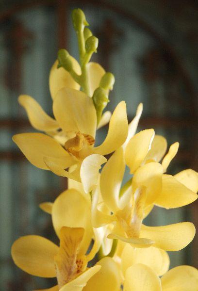 "Yellow Vandas 31"" Artificial Orchids"
