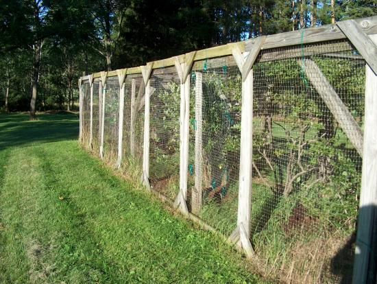 37 Best Images About Berry Cage On Pinterest Gardens