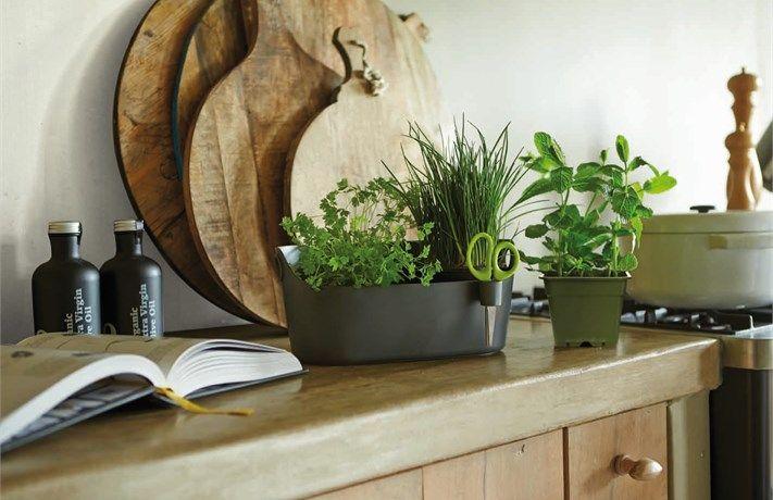 3 sposoby na domowy zieleniec | Doniczka ziołowa Brussels Herbs Max | antracyt elho