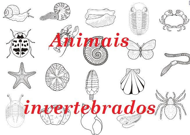 Animales Vertebrados E Invertebrados Para Colorear Imagui Words
