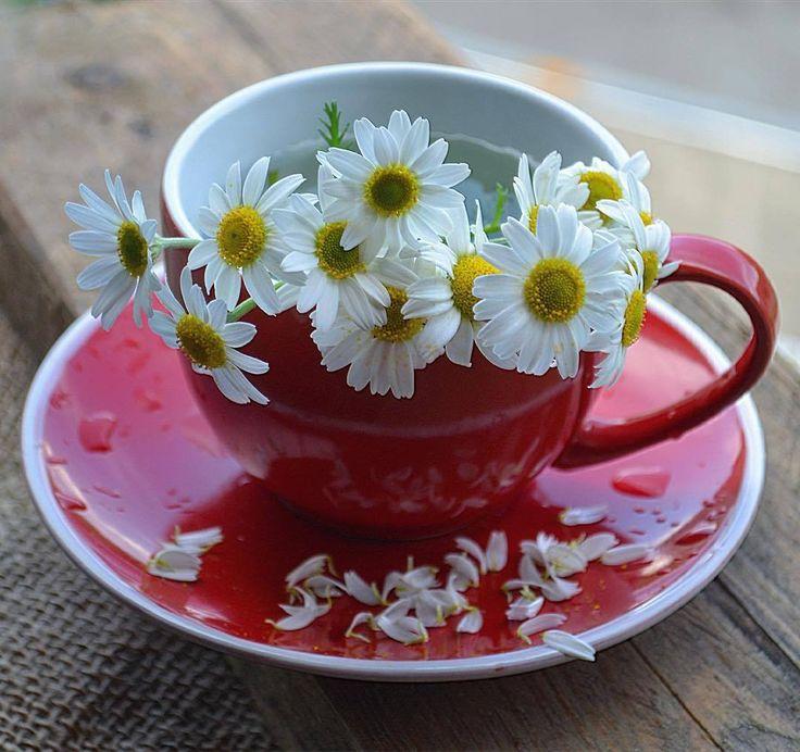 Доброе утро картинки красивые ромашки, картинки анимашки