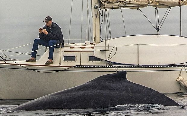 This Instagram photo shows a man missing a humpback whale surface two feet away from him because he was glued to his phone. The moment was caught during a whale watch in Redondo Beach, California, professional photographer Eric Smith told ABC News today. Smith said he had about five photos of whales with the private sailboat in the background, but the guy never got off his phone in any of the pictures.