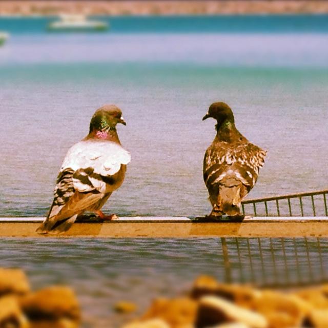 Cagliari Poetto i piccioni chiacchierano