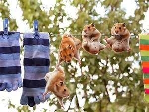 ... // Backgrounds // Humor | Funny // Hamsters | Wallpapers 1600x1200