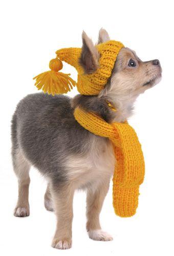 Bufanda y gorro tejidos para perro