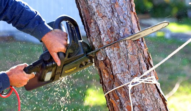 Knoxville Tree Service is your leading tree service company with a passion for taking care of trees. Our services include tree planting, pruning, removal, stump grinding, and plant health care among other services. http://knoxvillestreeservice.com