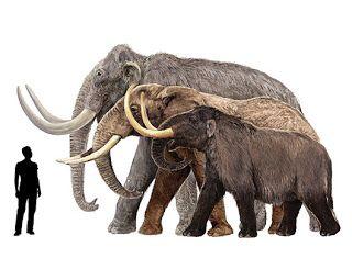 Palaeos, la historia de la Vida en la Tierra: Galería: Mastodonte (y algunas diferencias con los Mamutes)