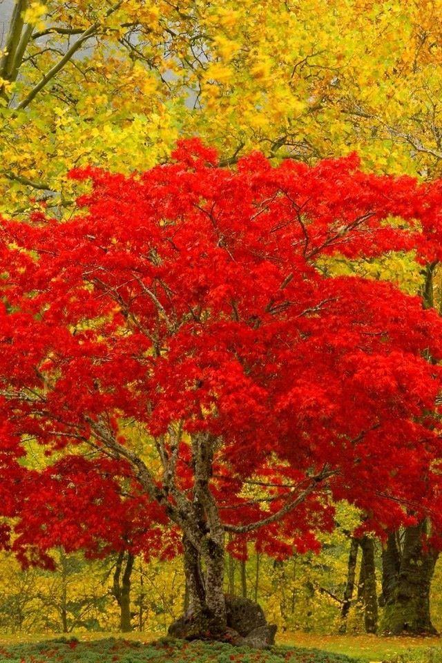 Burst Of Autumn Autumn Splendor Pinterest Autumn