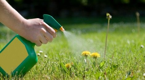 Natural weed killers for beautiful, chemical-free gardens!