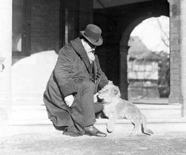 Sir Charles Ball and Jerry - Domestic Lion