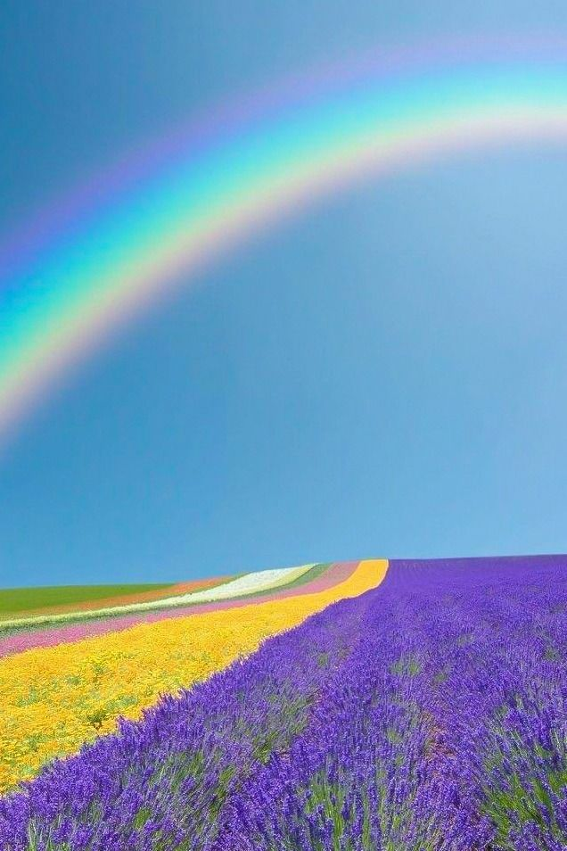 rainbow colorful flower rainbows field above nature perfect lavender flowers most fields colors beauty meadows meadow sky mother son end