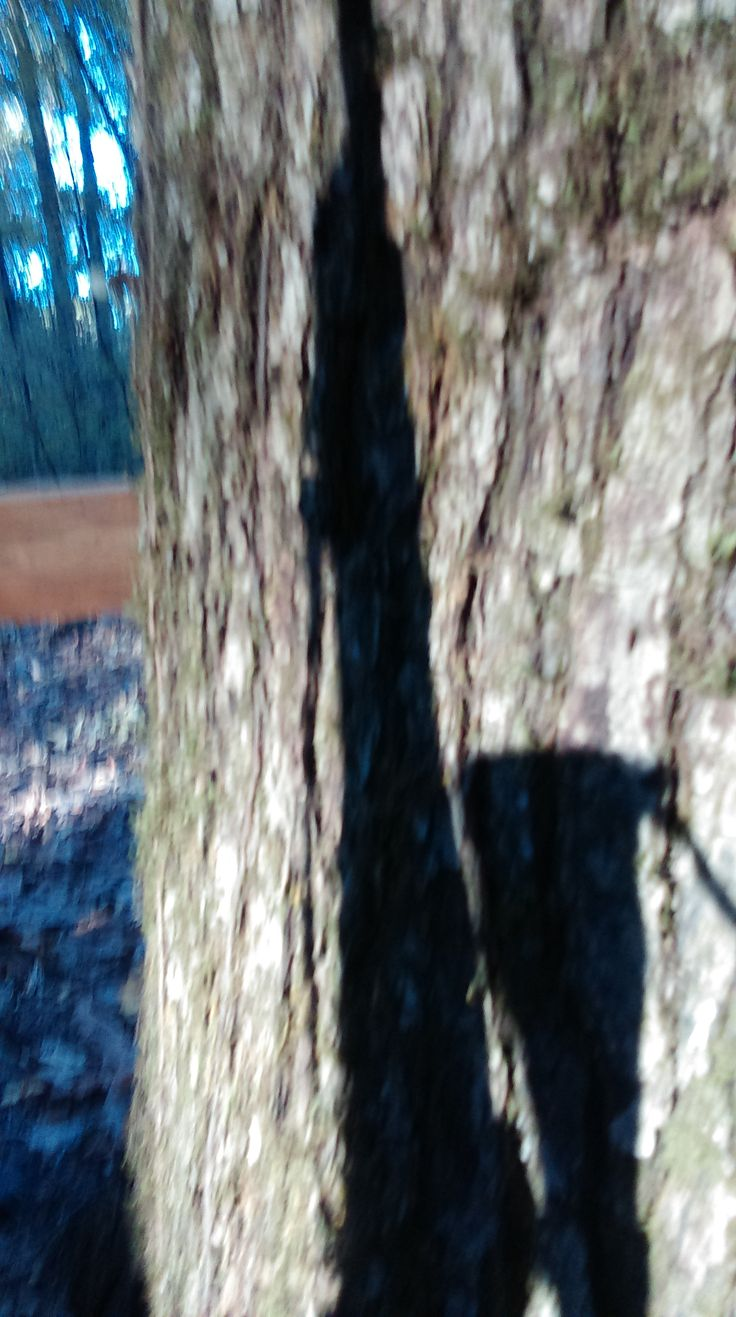 My .270 shadow on a tree trunk while hunting.