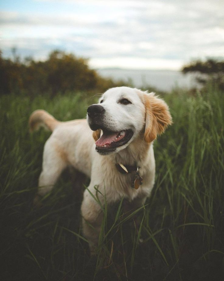 A Delightful Moment Milo The Adventure Dog With Images Dog