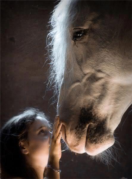 Beautiful.: Little Girls, Horses, Beautiful Hors, Quote, Magic Moments, Children, White Hors, Photo, Animal